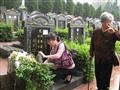 2016清明节扫墓